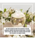 Cacharel-Fragrance-Noa-000-3360373016341-Ingredient